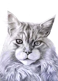 art artwork cat pets animals monochrome for-him for-her for-children personalised online greeting card