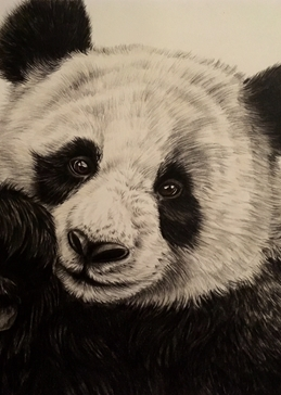 Art Giant pandas bears for-her for-kids animals wildlife  personalised online greeting card