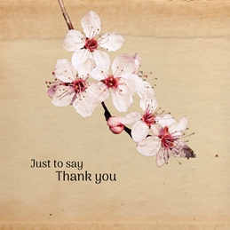 Thank thank you blossom for-her flowers twig plant wall pink white petal bloom spring cherryblossom stylish modern minimalist clean sharp fuchsiapink personalised online greeting card