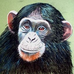 art artwork monkey chimpanzee animals wildlife zoo for-him for-her personalised online greeting card