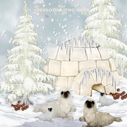 christmas  greeting cards by Little Bird Greetings Cards Christmas wildlife Seal Island 2