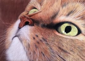 General  art Cat cats eyes love tabby personalised online greeting card