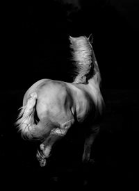 General horse wild white equine equestrian pony mono monochrome black simple spiritual personalised online greeting card