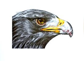 General artwork birds eye eagle wildlife for-him for-her personalised online greeting card
