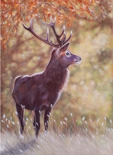 Art general deer wildlife nature art personalised online greeting card
