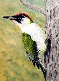 general art  woodpecker  birds wildlife personalised online greeting card