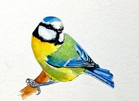 General  tit birds wildlife for-her for-him  personalised online greeting card