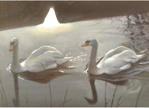 Swans in spring