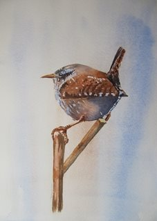 art Wren, Bird, Wild birds, twig, portrait, animals personalised online greeting card