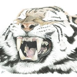 Sophie Louise Creates Tigers Roar  Art General Tiger, wildlife, animal, big cats personalised online greeting card