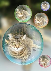 General cats bubbles animals z%a personalised online greeting card