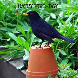 Birthday Blackbird flower pot garden personalised online greeting card