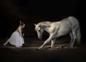 General ballet dancer bow horse white equine animal romantic equestrian personalised online greeting card