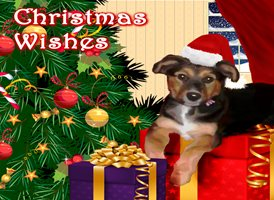 Lizzy'sCardsLTD Christmas pooch 1 (commissioned work) Christmas dogs animals  z%a personalised online greeting card