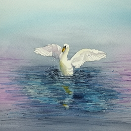 Swan, stretching, blues, pinks, nature, water,general , artistic personalised online greeting card
