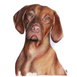 art Hungarian Viszla dog pencil drawing, animals z%a personalised online greeting card