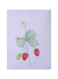 ^fruit^ personalised online greeting card