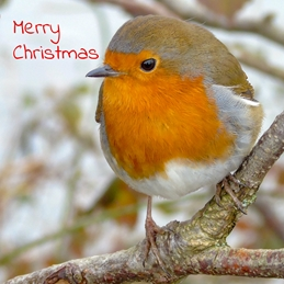 Photography Christmas Christmas, Robins, birds, nature, wildlife, photo personalised online greeting card