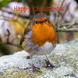 Christmas Christmas, Robin, birds, photography  nature, wildlife  personalised online greeting card