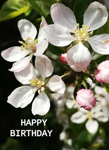 Birthday Happy Birthday, female, blossom, pink, petals personalised online greeting card