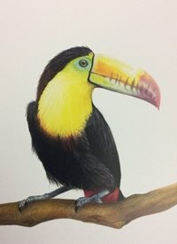 Art Toucan birds thank you with love animals personalised online greeting card