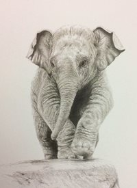 Art Elephant cute new baby thank you animal with love personalised online greeting card
