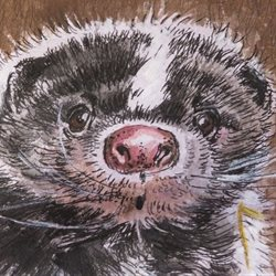 Little Liz Happy Art Ooh! General skunk, skunks, cute, animals, cuddly, creature, surprise,  personalised online greeting card