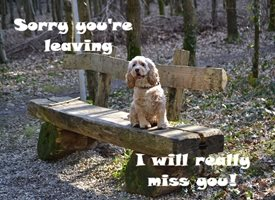 General Spaniel Leaving Miss You Dog Cute personalised online greeting card