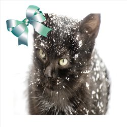 Christmas QUIRKYTAGS CUTE  ANIMALS KITTENS  z%a personalised online greeting card
