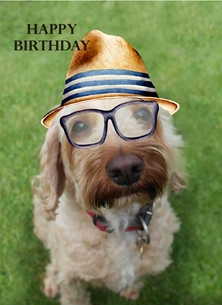 Snappyscrappy Birthday Card Birthday Dog, Cute, For-Him, Animal personalised online greeting card