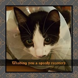 ALL Dog and Cat Rescue (ADCR) Recovery cat Get Well Cat kitten poorly sick ill recovery cute animals personalised online greeting card