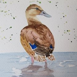 art Mallard, Duck, Water Birds, Bird, Countryside, water, reflections, animals personalised online greeting card