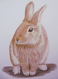 General easter Rabbit, Bunny,  honey, brown, cute, rabbits, wildlife, countryside,  personalised online greeting card