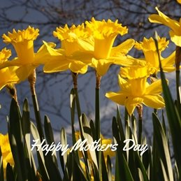 mothers Daffodils Flowers Spring personalised online greeting card