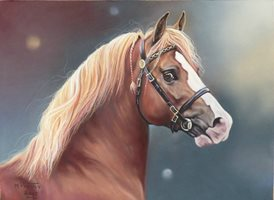 Art Equine, horse, pony, cob, welsh cob, stallion, head study z%a personalised online greeting card
