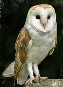 ^barn owl^, ^falconry^, ^bird of prey^, personalised online greeting card