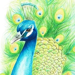 General peacock, bird, wildlife, proud, beautiful, beauty personalised online greeting card