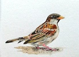 General artwork  sparrow birds wildlife for-him for-her personalised online greeting card