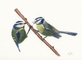 art Birds Blue tits  garden Animals personalised online greeting card