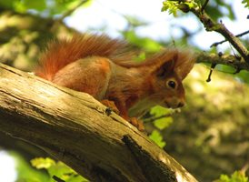 photography  Red Squirrel animals z%a personalised online greeting card