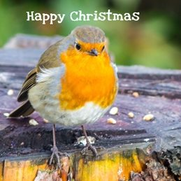 Christmas Christmas, birds, nature, wildlife, redbreast, Robin bird photography  personalised online greeting card