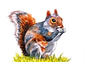 art artwork squirrel animals wildlife for-him for-her for-children personalised online greeting card