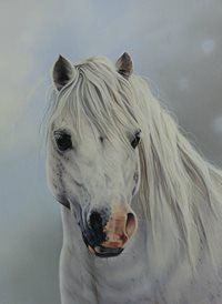 Art pony, equine, welsh mountain pony z%a personalised online greeting card