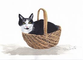 art Black and white  cats Tuxedo kitten  basket animals  personalised online greeting card