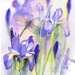 General dragonfly, Irises, purple,  personalised online greeting card