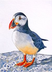 general puffin birds wildlife rocks dad son  granddad  uncle mum daughter Nan aunt friend personalised online greeting card