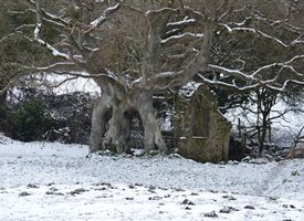 Wight Life Images Quarr ruins in snow Photography Snow Ruins winter greetings  personalised online greeting card