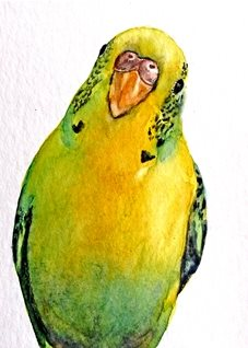 art artwork budgerigar birds pets for-him for-her for-children personalised online greeting card