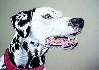 General artwork Dalmatian dog animals  pets for-her for-him personalised online greeting card