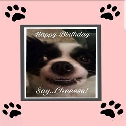 Birthday Humour, animals, pets, funny z%a personalised online greeting card